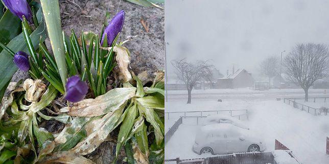 To ostatni atak zimy w tym roku. Internauci podesłali nam zdjęcia