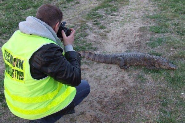 W kwietniu 2012 r. policjantów wezwano do krokodyla, na którego natrafił w Warcie jeden z wędkarzy.