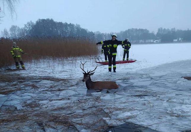 Heroiczna akcja strażaków trwała bardzo długo