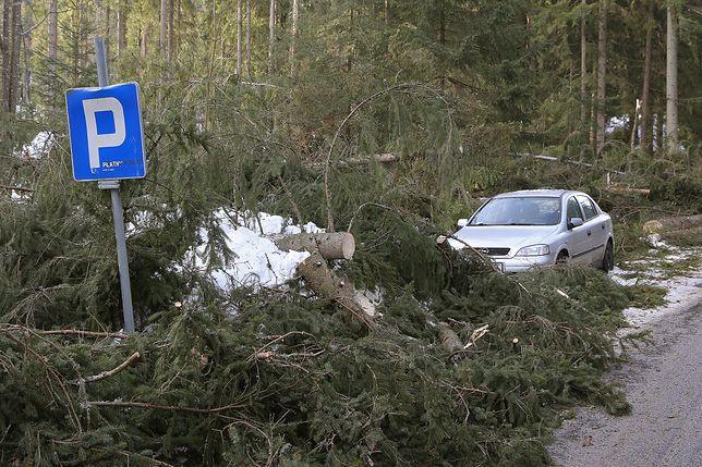 Na Podhalu wiele dróg blokują drzewa powalone przez porywy halnego.