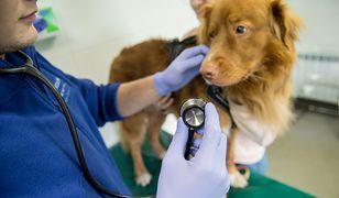 Podczas nagrania, weterynarz został sam z psem