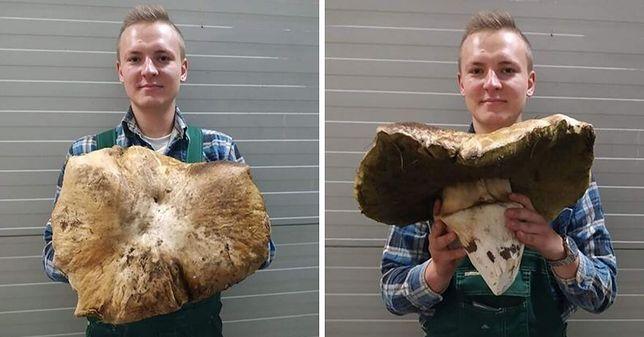 Borowik - gigant. Olbrzymi grzyb znaleziony w Wielkopolsce