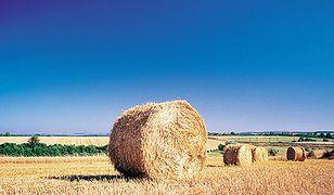 Ziemia rolna w Polsce drożeje... a będzie jeszcze droższa