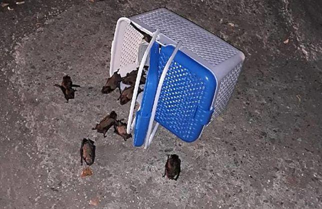 Kilkadziesiąt nietoperzy wleciało do mieszkania. Musiała przyjechać straż pożarna