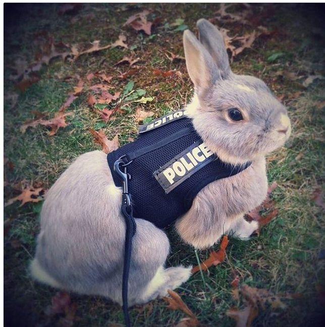 """""""Policyjny królik"""". Stołeczni policjanci złożyli nietypowe życzenia wielkanocne"""