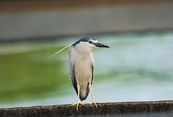 Śląsk. Rzadkie ptactwo wraca z ciepłych krajów, możemy to obserwować
