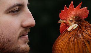 Kamil Mączkowski jest utytułowanym hodowcą kur ozdobnych. Zajmuje się tym od kilkunastu lat