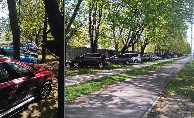 Z wizytą w ZOO. Kierowcy zaparkowali gdzie się dało, na najmniejszym kawałku zieleni