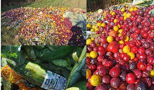 Czytelniczka WP natknęła się na setki kilogramów warzyw i owoców rozsypanych na łące