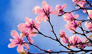 Wiosna 2019 – kiedy pierwszy dzień wiosny w 2019 roku? Kiedy zacznie się wiosna astronomiczna, a kiedy kalendarzowa?