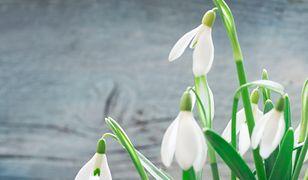 Pierwszy dzień wiosny 21 marca 2019 - sprawdź, kiedy będzie  wiosna kalendarzowa, a kiedy astronomiczna