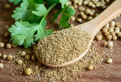 Kolendra – wartości odżywcze, właściwości lecznicze, kulinarne zastosowanie