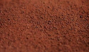 Czy warto włączyć surowe kakao do diety?