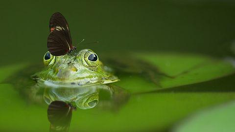 Weź aplikację iNaturalist na spacer, zostań przyrodnikiem