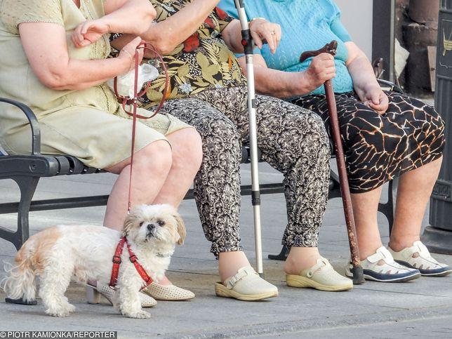 Trzynasta emerytura była minimalnie niższa. ZUS zaoszczędził na niej 2,5 mln zł