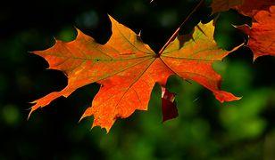 Długoterminowa prognoza pogody na jesień