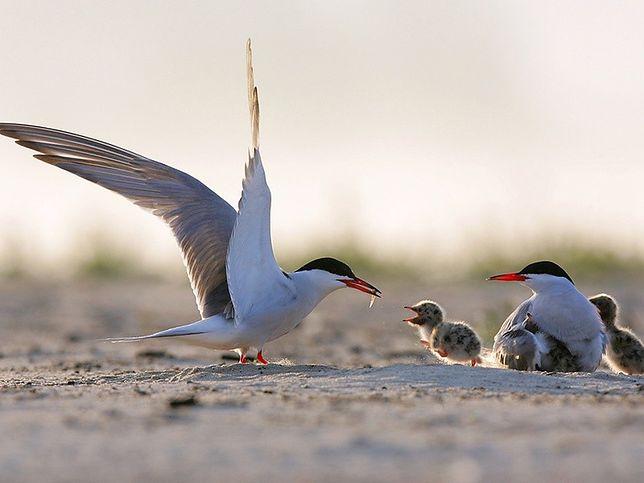 Za darmo: Film o życiu Wisły i spacer ornitologiczny