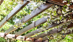 Ozdobisz budynek i stworzysz idealne miejsce do wzrostu roślin
