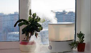 Jak nawilżyć powietrze w domu? Skuteczne sposoby