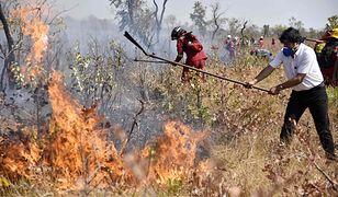 Amazonia. Boliwa dostanie pomoc ze strony Unii Europejskiej