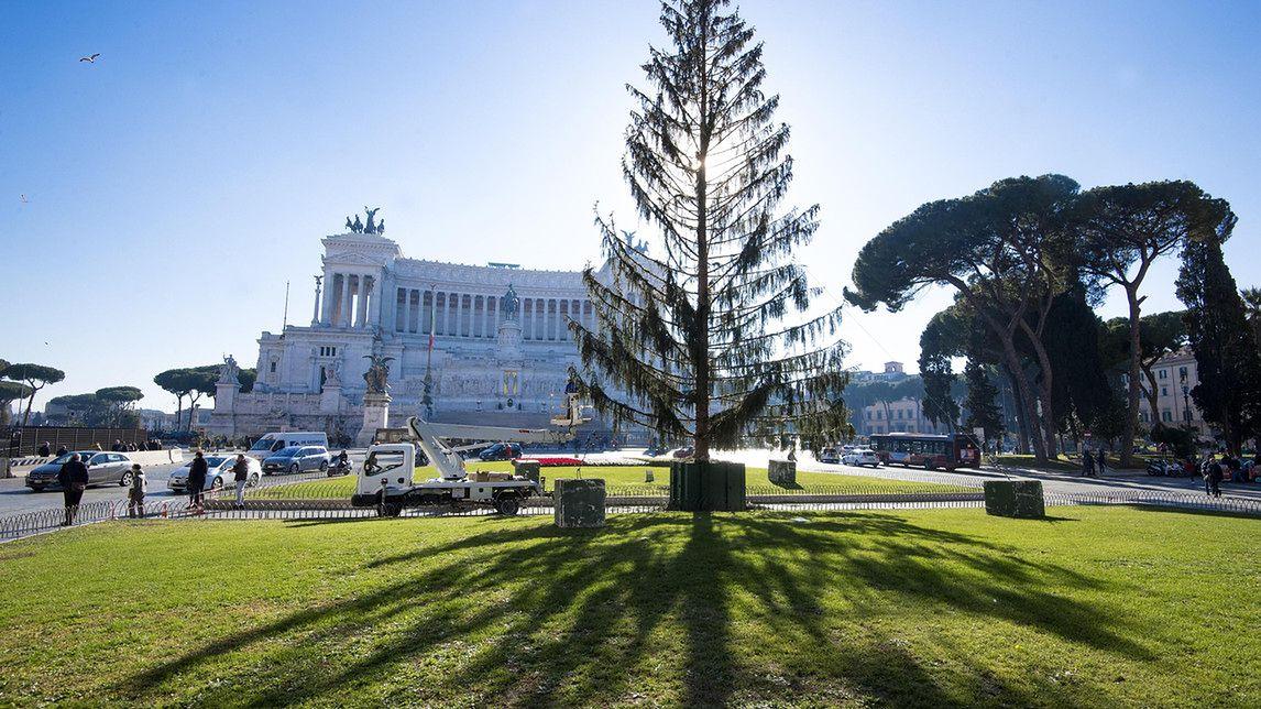 Choinka za 50 tys. euro może trafić do muzeum. Wcześniej wywołała skandal