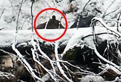 Niedźwiedź uratowany z potoku w Tatrach. Monitorują jego wędrówkę