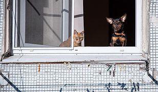 Agencja zaleca zachowanie dystansu społecznego również w przypadku psów i kotów.
