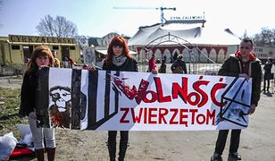 Jeden z protestów przeciwników wykorzystywania zwierząt w cyrku.