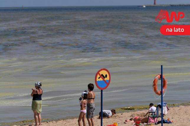 Spoty kurortów kontra rzeczywistość. Turyści spodziewają się pięknych plaż, a dostają sinice