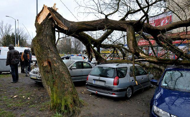 Samochody zmiażdżone przez drzewo, które wichura przewróciła w Szczecinie
