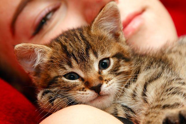 Należy być ostrożnym w kontaktach z kotami, szczególnie tymi żyjącymi na ulicy.