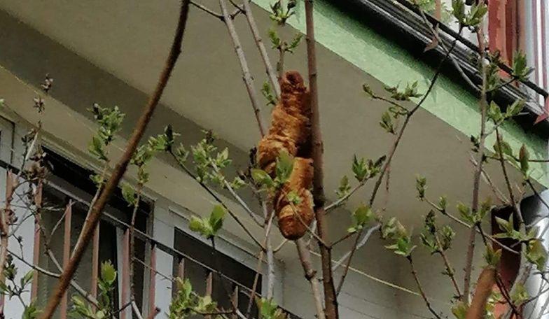 W Krakowie myśleli, że to egzotyczne zwierzę. Prawda była zupełnie inna