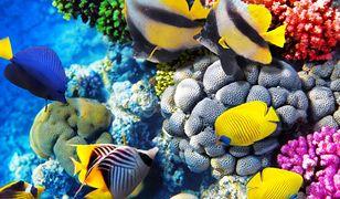 Rafy koralowe są domem dla wielu gatunków stworzeń morskich