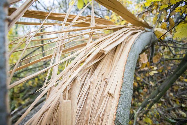 Zerwane drzewo spadło na namiot harcerski