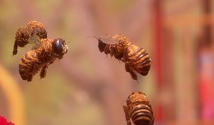 Bee Simulator niespodziewanie okazał się dużym sukcesem finansowym