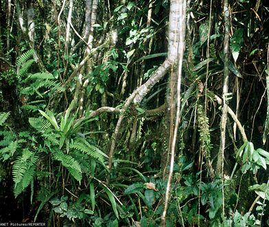 Kobieta z trójką dzieci przetrwałą w amazońskiej dżungli 34 dni