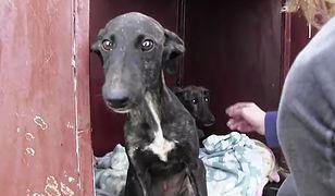Prudnik: Kobieta zagłodziła psa. Grozi jej pięć lat więzienia