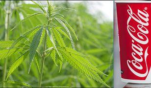 Coca-Cola chce stworzyć napój zawierający marihuanę