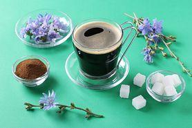 Kawa z cykorii – działanie, właściwości i przeciwwskazania