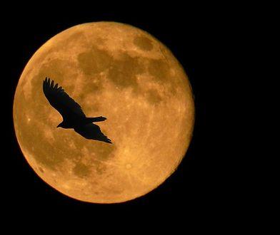 Księżyc w pełni, albo strach ma wielkie oczy