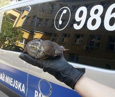Warszawski Ekopatrol uratował drapieżnego ptaka