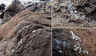 Nie wiadomo jeszcze, jak bardzo szkodliwe na morskie życie może mieć plastikowy nalot