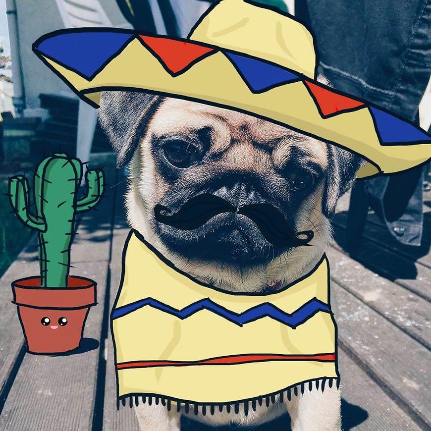 A może burrito?