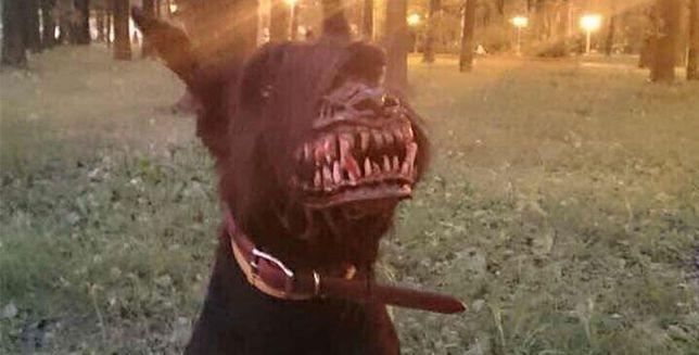 Nawet łagodnego psa zamienią w prawdziwego zabijakę