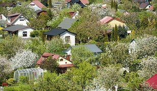 Posiadacz ogródka może mieć problem, jeśli nie jest właścicielem nieruchomości.