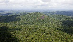 W Amazonii rośnie 16 tys. gatunków drzew