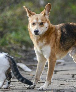 Warszawa. Zaczipuj pupila. Ruszają bezpłatne zabiegi dla zwierząt