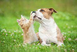 Wojewoda wstrzymuje bezpłatną sterylizację psów i kotów na terenie Warszawy