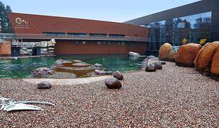 Najnowocześniejszym obiektem zoo we Wrocławiu jest Afrykarium
