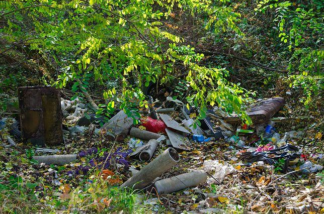 Mieszkańcy Kaszub wściekli. Mają dość zaśmiecania lasów